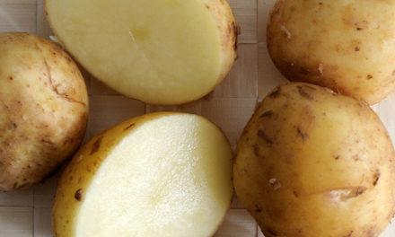 12 Spécialités Vendéennes : le meilleur de la gastronomie Vendéenne
