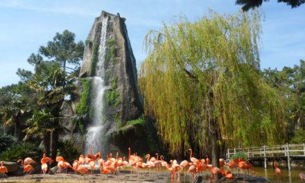 Le zoo de La Palmyre et son engagement auprès des espèces protégées