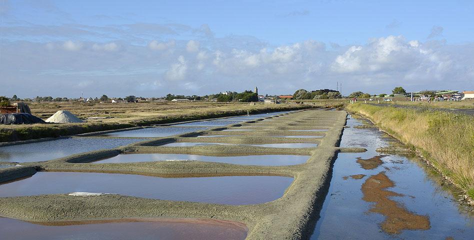 Les marais salants de Charente-Maritime, une histoire d'or blanc