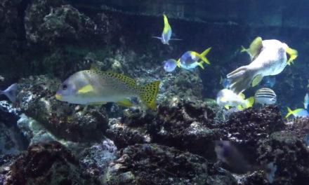 L'Aquarium de La Rochelle : un incontournable à découvrir !