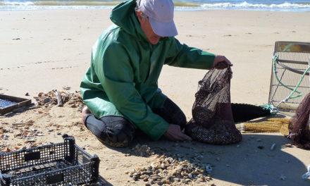 La pêche à pied en Charente-Maritime