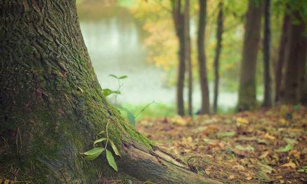 La forêt de Mervent, un écrin de nature de plus de 5000 hectars