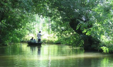 Le parc ornithologique du Marais Poitevin, dans les Deux-Sèvres