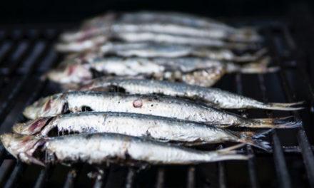 À la découverte de la sardine de Saint-Gilles-Croix-de-Vie