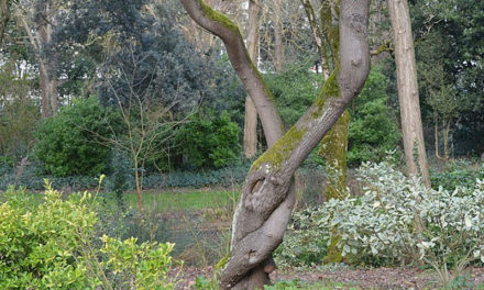 Le parc Charruyer, un lieu paisible à La Rochelle