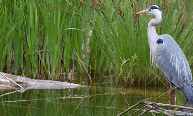 marais-oiseaux-COUV
